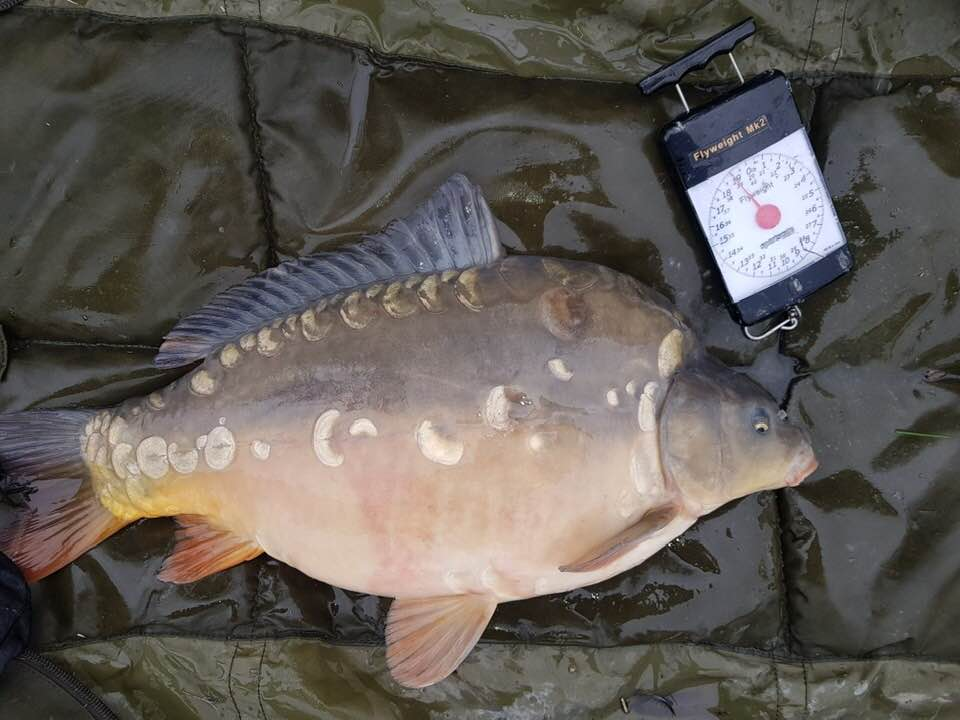 Fast Growing Carp For Sale